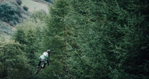 Mountain Biker in the Forrest